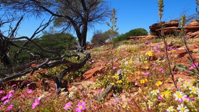 Überall blühen jetzt die Wildblumen, sie säumen die Straßenränder und leuchten in allen Farben, soweit das Auge reicht. In dieser Hinsicht haben wir die perfekte Reisezeit gewählt.