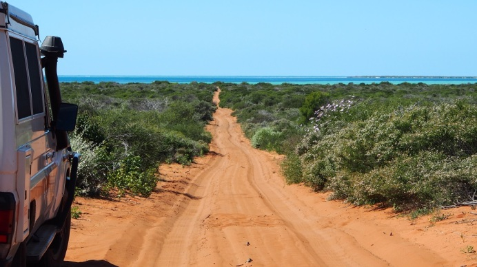 Der Francois Peron National Park hat uns bereits bei unserer letzten Tour nach Westaustralien fasziniert, daher liegt er natürlich auch dieses Mal wieder auf unserer Route. Man hat die Spitze einer Halbinsel in einen National Park umgewandelt und dafür gesorgt, dass sich hier einheimische Tiere, die vom Aussterben bedroht waren, wieder vermehren können. Dazu wurde die Halbinsel durch einen Zaun abgeteilt und alle Tiere entfernt, die hier nicht beheimatet sind, wie Füchse und Wildkatzen. Diese waren von Einwanderern mitgebracht worden und haben hier keine natürlichen Feinde. Das Faszinierende für den Besucher sind allerdings die Farben, rote Felsen, tiefblauer Himmel, weißer Strand und türkisfarbiges Meer. Ein Reich der Sinne. Die Zufahrt zum Park ist nur Allradfahrzeugen vorbehalten. Die Sandpisten sind anspruchsvoll für Fahrer und Fahrzeug, für uns aber kein Problem.
